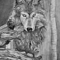 Grey Wolf by Celia Fedak