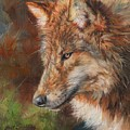 Grey Wolf Face by David Stribbling