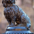 Greyfriars Bobby by Andre Goncalves