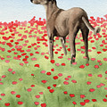 Greyhound In Poppies by David Rogers