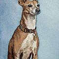 Greyhound Commission Painting By Irina Sztukowski by Irina Sztukowski