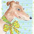 Greyhound by Jo Chambers