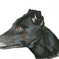 Greyhound by Yvonne Johnstone