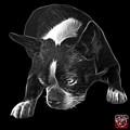 Greyscale Boston Terrier Art - 8384 - Bb by James Ahn