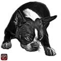Greyscale Boston Terrier Art - 8384 - Wb by James Ahn