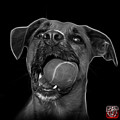 Greyscale Boxer Mix Dog Art - 8173 - Bb by James Ahn