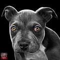 Greyscale Pitbull Puppy Pop Art - 7085 Bb by James Ahn