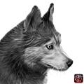 Greyscale Siberian Husky Art - 6048 - Wb by James Ahn
