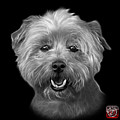 Greyscale West Highland Terrier Mix - 8674 - Bb by James Ahn