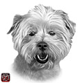 Greyscale West Highland Terrier Mix - 8674 - Wb by James Ahn