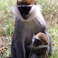 Grivet Monkey At Lake Awassa by Aidan Moran