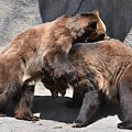 Grizzlies' Playtime 4 by Flo McKinley