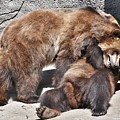 Grizzlies' Playtime 5 by Flo McKinley