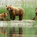 Grizzly Bear Family  by Myrna Bradshaw