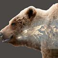 Grizzly Bear  by Gary O'Boyle