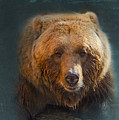 Grizzly Bear Portrait by Betty LaRue