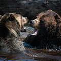 Grizzly Bears by Naman Imagery