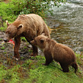 Grizzly Dinner For Two by Herbert L Fields Jr