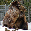 Grizzly Fun by Cindy Murphy - NightVisions