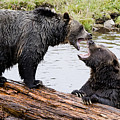 Grizzly Love by Windy Corduroy
