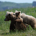 Grizzly  Mother And A Cub In Katmai National Park by OLena Art - Lena Owens