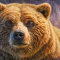 Grizzly Portrait by Phil Jaeger