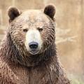 Grizzly Portrait by Tammy Crawford