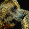 Grizzly Profile by Ernie Echols