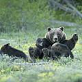 Grizzly Romp - Grand Teton by Sandra Bronstein