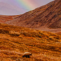 Grizzly Under The Rainbow by Jeff Folger