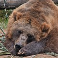 Grizzly's Naptime by Flo McKinley