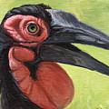 Ground Hornbill by Svetlana Ledneva-Schukina