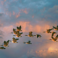 Group Flight by John Rivera