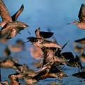 Group Flight by Robert Carlsen