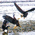Group Of Eagles by Clarence Alford