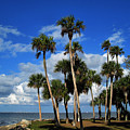 Group Of Palms by Susanne Van Hulst