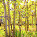 Grove Of Aspens On An Autumn Day by Amy Sorvillo