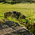 Growing On Rocks. by Elena Perelman
