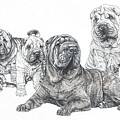 Growing Up Chinese Shar-pei by Barbara Keith