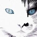 Grumpy Cat Portrait by Queso Espinosa