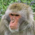 Grumpy Monkey by Art Kurgin