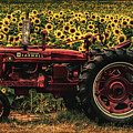 Grunged Red Farmall Tractor  by Barbara Bowen