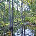 Guana Marsh by Kenneth Albin