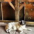 Guard Dog by Diana Rajala