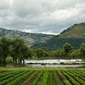 Guatemalan Nursery And Lake by Douglas Barnett