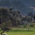 Guatemalan Pastoral Scene 2 by Douglas Barnett