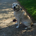 Guide Dog by Ee Photography