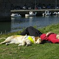 Guide Dog Relaxing by Adrian Wale