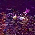 Guillemot Sea Bird Nature Coast  by PixBreak Art