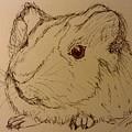 Guinea Pig by Nicole Porter